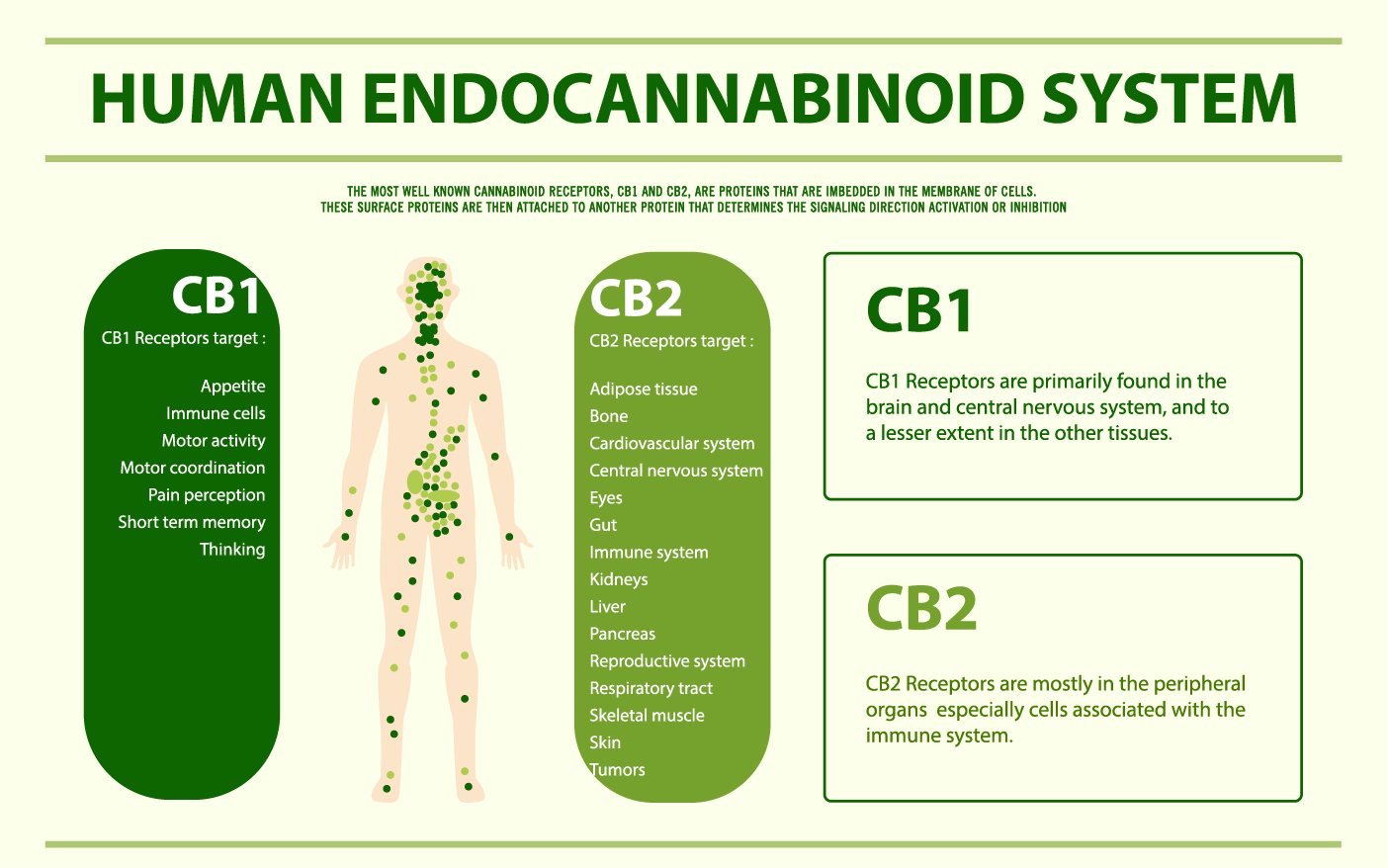 CBD effects on the bran and body